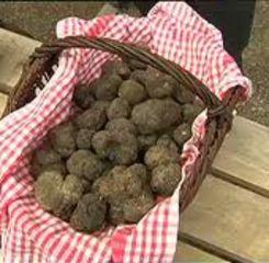 Le marche aux truffes de l'Albenque