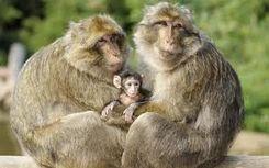 La foret des singes